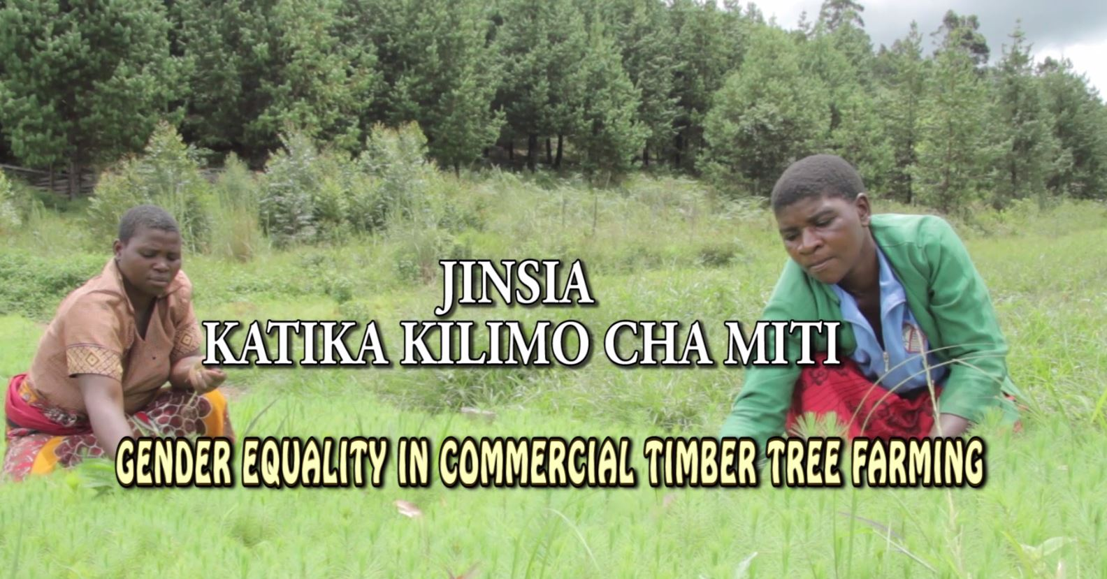 1.	GENDER EQUALITY IN NON-INDUSTRIAL PRIVATE FORESTRY